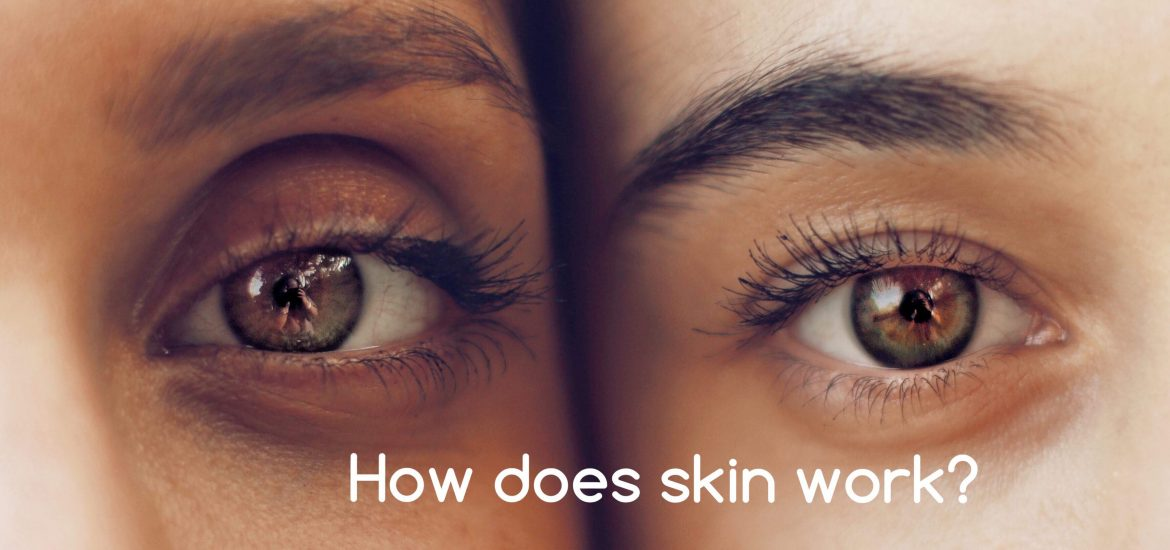 How does skin work?